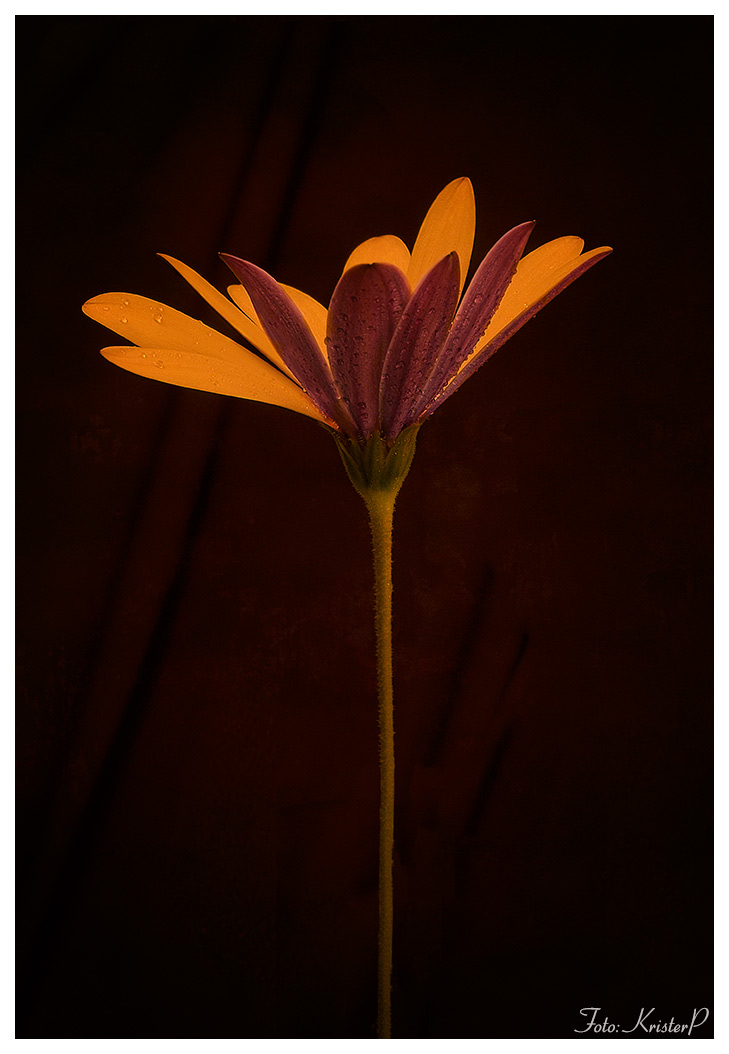Flower-photography2
