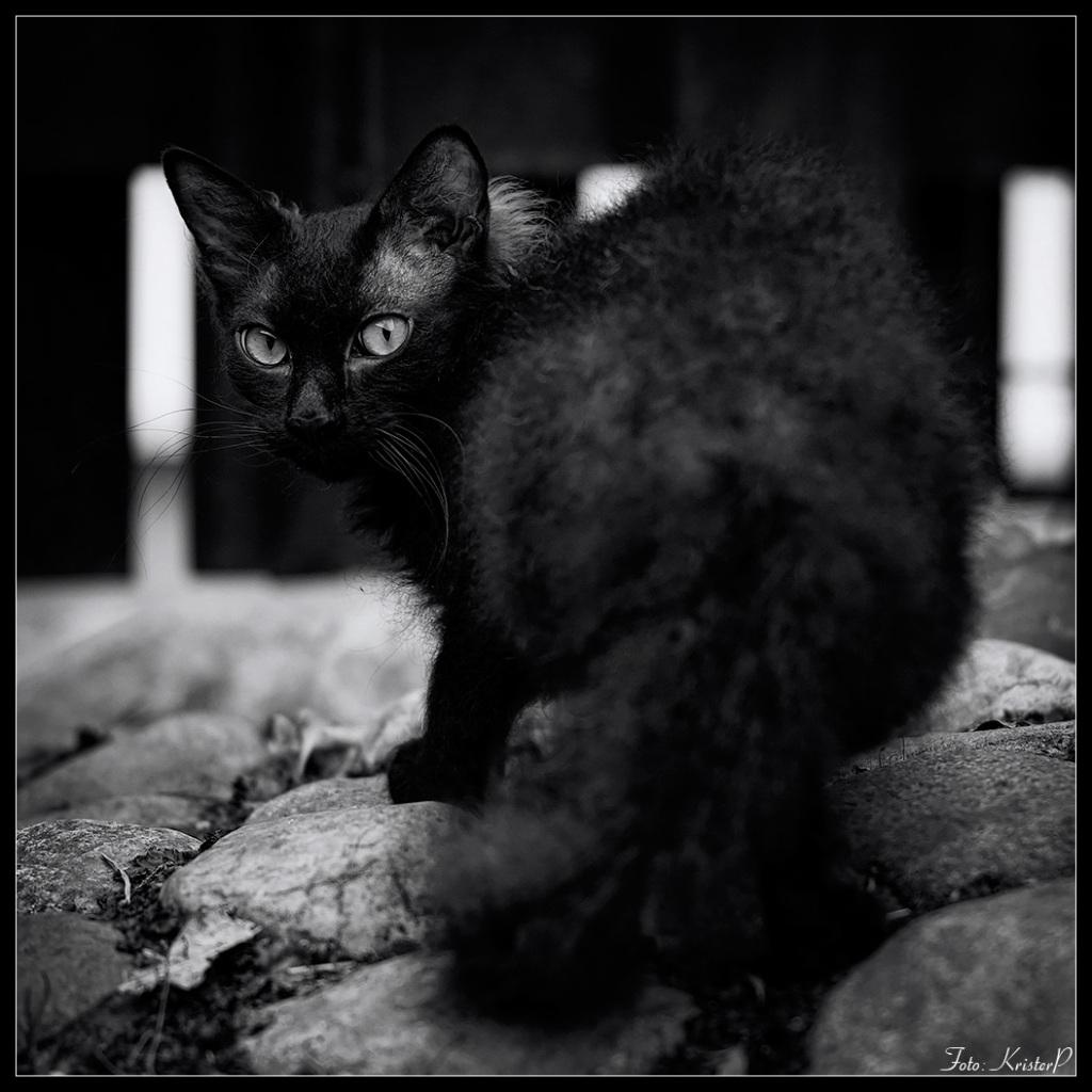 Black-cat,-square-crop