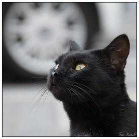 Cat004