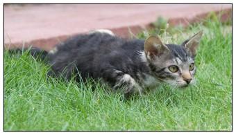 Cat010