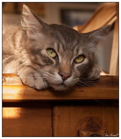 Cat015
