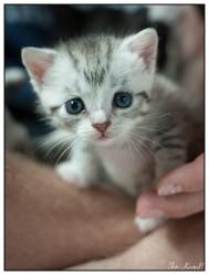 Cat017