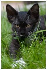 Cat019