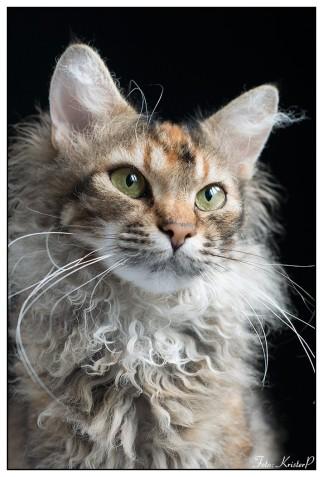 Cat022