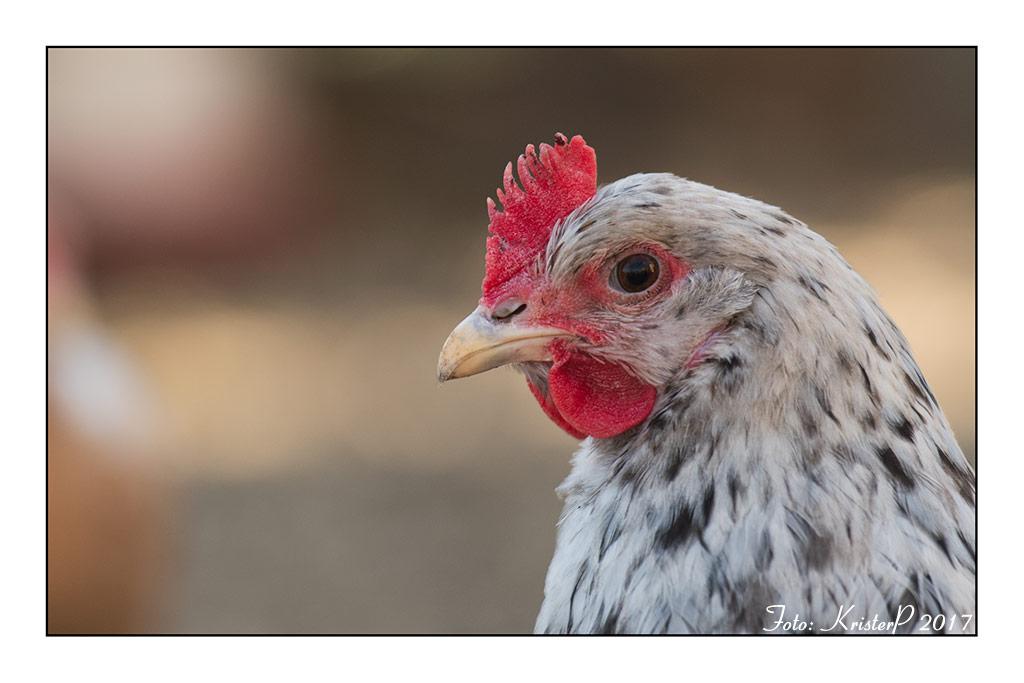 Silverudds Blue Chicken