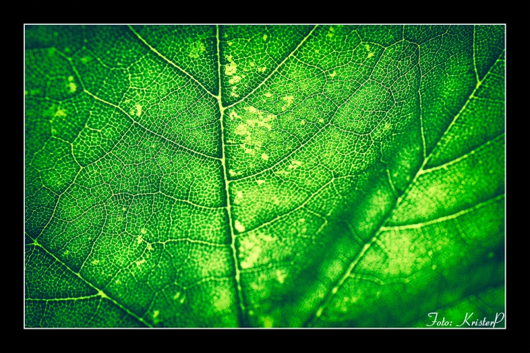 Cells - Nikon D500