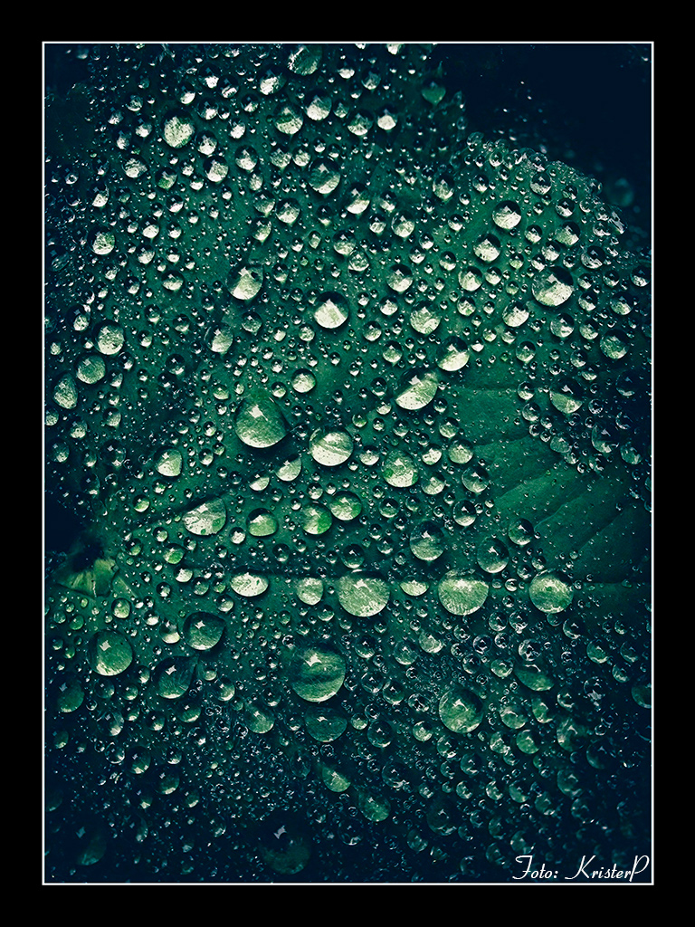 Sprinkled green