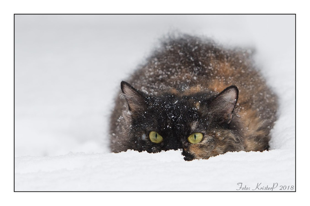 Snow prowler