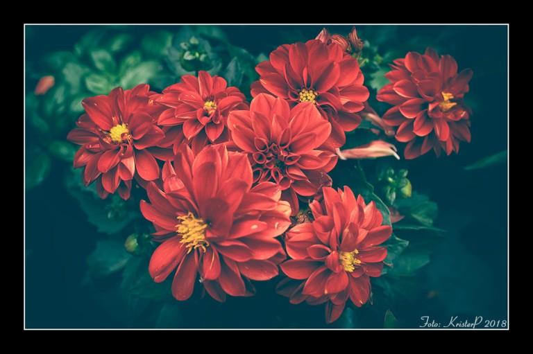 Natural Wonders: Red